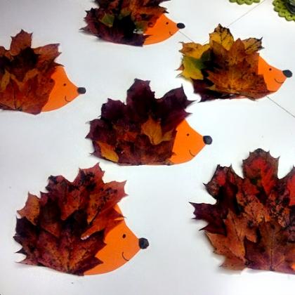 Maple Leaf Hedgehog